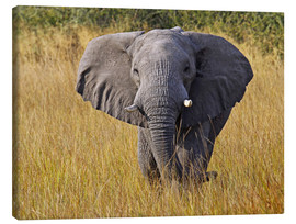 Tableau sur toile  Elephant in the gras - Africa wildlife - wiw