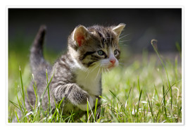 WildlifePhotography - Chaton