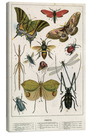 Tableau sur toile  Insects - English School