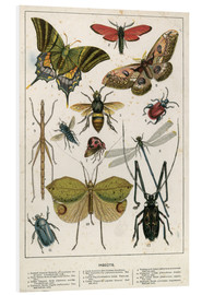 Forex  Insects - English School