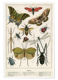 Poster  Insects - English School