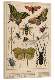 Bois  Insects - English School