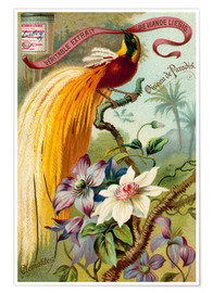Poster Liebig Extract with bird of paradise