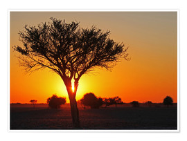 Poster Sunrise in Africa