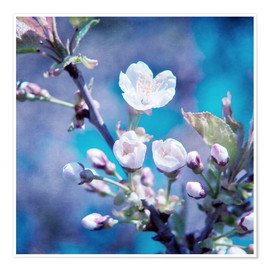 Poster  CHERRY BLOSSOM - INA FineArt