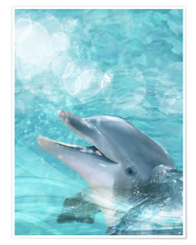 Poster  Dauphin - Dolphins DreamDesign