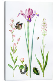 Toile  Red catchfly, rose, iris & orchis - Maria Sibylla Merian