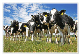 Poster cows