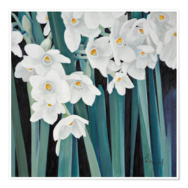 Poster Daffodils