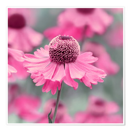 Poster Pink Flowers