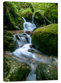 Tableau sur toile  Little Waterfall in Black Forest - Andreas Wonisch