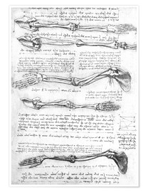 Leonardo da Vinci - Bones of the arms