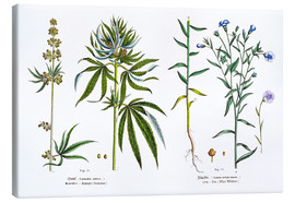 Toile  Cannabis and Flax - Matthias Trentsensky