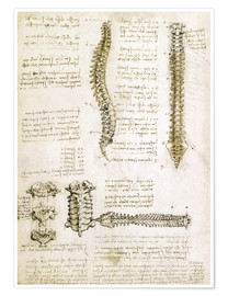 Leonardo da Vinci - The spine
