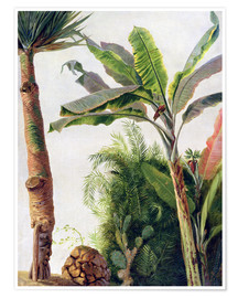 Poster  Banana Tree - Frederic Edwin Church