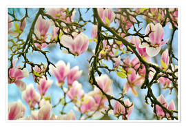 Poster  Magnolias look in the Spring - Julia Delgado