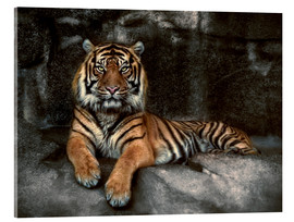 Verre acrylique  king of the jungle - Joachim G. Pinkawa