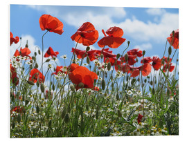 Tableau en PVC  Poppy (Papaver rhoeas) - Renate Knapp