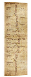 Verre acrylique  Surya Namaskara The Sun Salutation(vertical) Yoga Poster - Sharma Satyakam