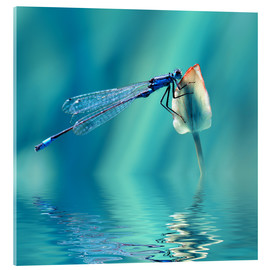 Verre acrylique  Dragonfly with Reflection - Atteloi