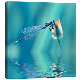 Tableau sur toile  Dragonfly with Reflection - Atteloi