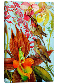 Tableau sur toile  Exotic birds on orchids