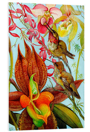 Exotic birds on orchids