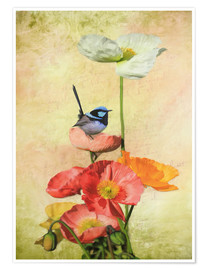 Poster  Californian Poppies - Selina Morgan
