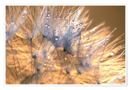Poster Dandelions Magic Light
