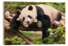 Bois  Giant panda sleeping - Jan Christopher Becke
