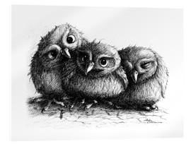 Verre acrylique  Three young owls - owlets - Stefan Kahlhammer