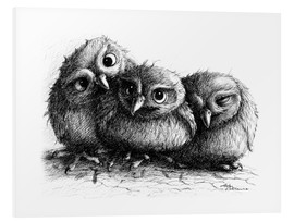 Forex  Three young owls - owlets - Stefan Kahlhammer