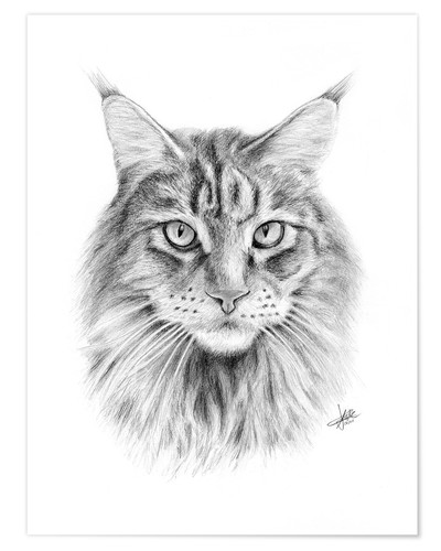 Poster Maine Coon Cat