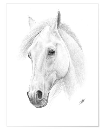 Poster Horse drawing