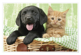 Poster Puppy and kitten in green gingham