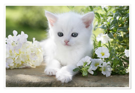 Poster White cat in flowers