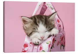 Tableau sur toile  Sleeping kitten in pink handbag - Greg Cuddiford