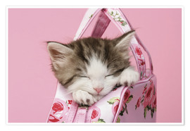 Poster Sleeping kitten in pink handbag