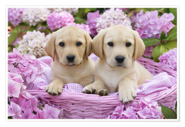 Greg Cuddiford - Labrador puppies in a basket