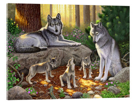 Tableau en verre acrylique  A family of wolves - Chris Hiett