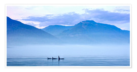 Poster  Three Killer whales in mountain landscape at Vancouver Island - Jürgen Ritterbach