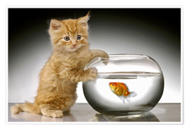 Poster  Ginger cat and fishbowl - Greg Cuddiford