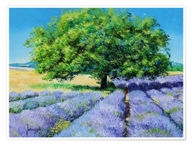 Poster  Tree and Lavenders - Jean-Marc Janiaczyk