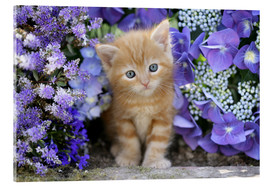 Verre acrylique  Ginger cat in flowers - Greg Cuddiford