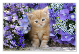 Greg Cuddiford - Ginger cat in flowers