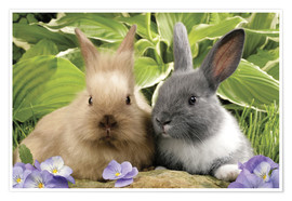 Poster Brown and grey rabbit
