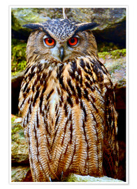 Poster  northern eagle owl - GUGIGEI