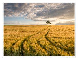 Poster  Lonely Tree in Field - Andreas Wonisch