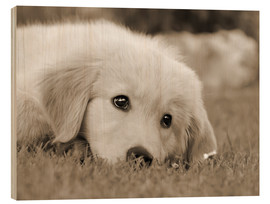 Tableau en bois  Golden Retriever cute puppy, monochrom - Katho Menden