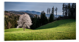 Verre acrylique  Blooming Apple Tree in Black Forest - Andreas Wonisch